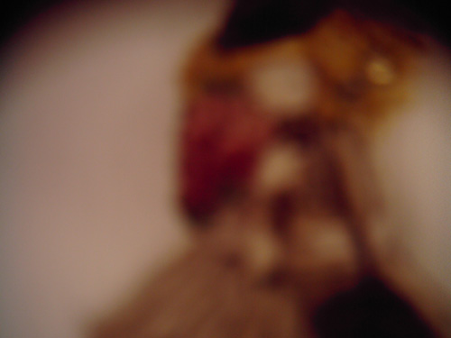【画像】壁に掛かった粘土人形をポラデジ izone 550でボカシながら撮影