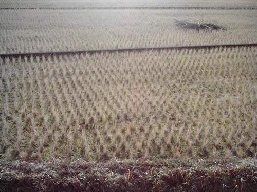 【画像】ポラデジ izone 550で撮影した稲刈り後の田んぼ