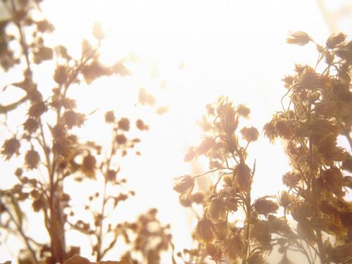 【画像】花をポラデジ izone 550で逆光撮影