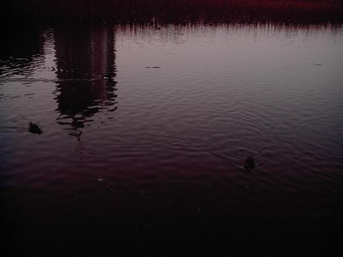 【画像】上野恩賜公園、不忍池の水面に反射したビルをポラデジ izone 550で撮影