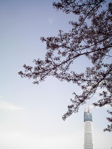【画像】浅草方面から東京スカイツリーをポラデジ izone 550で撮影