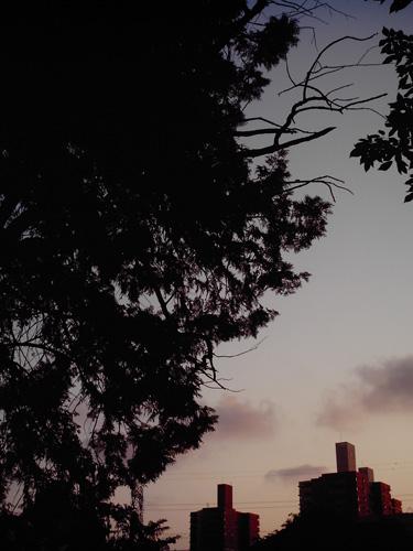 【画像】木々の間から見えるビルをポラデジ izone 550で撮影