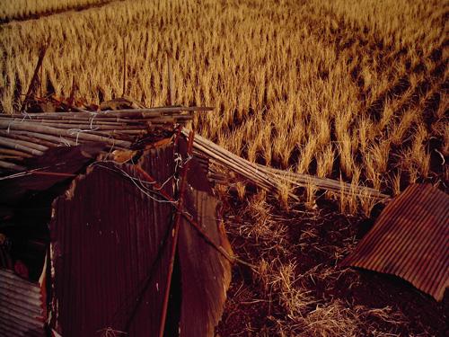 【画像】izone 550で撮影した稲刈り後の田んぼ